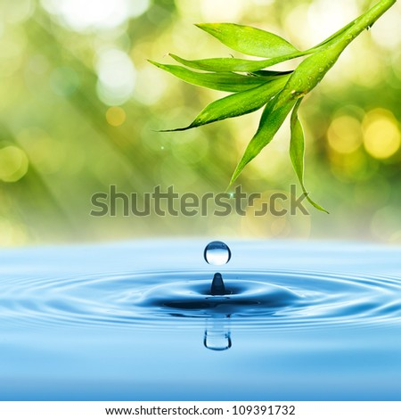 Bamboo leaf, fresh, with water drop on blue water and summer background - stock photo