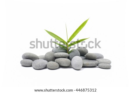 bamboo leaf on gray stones texture