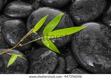 Bamboo leaf on wet black stones