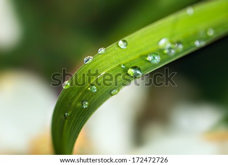 Bamboo leaf with dew drops, close up - stock photo