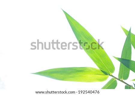 bamboo leafs isolated on the white background - stock photo