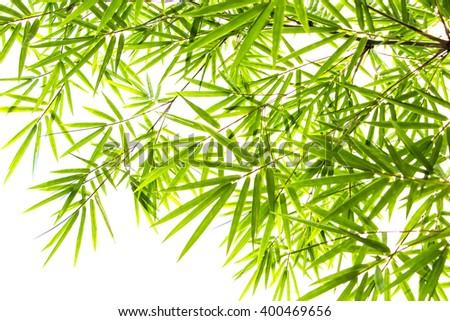 Bamboo leave isolated on white background - stock photo