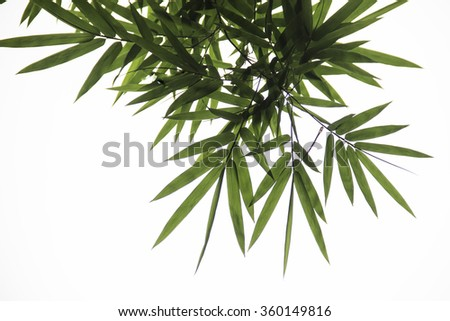 bamboo leave on white background  - stock photo