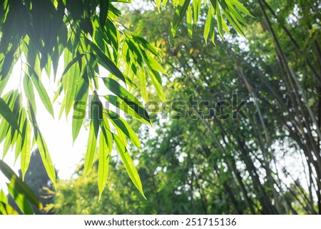 bamboo leaves close-up - stock photo