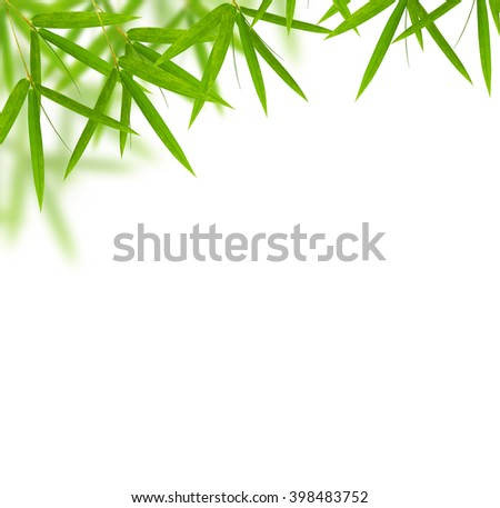 bamboo leaves frame  isolated on white background. - stock photo