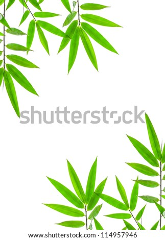 bamboo leaves High resolution image of wet bamboo-leaves isolated on a white background with clipping path - stock photo
