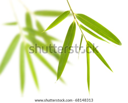 bamboo-leaves isolated on a white background - stock photo