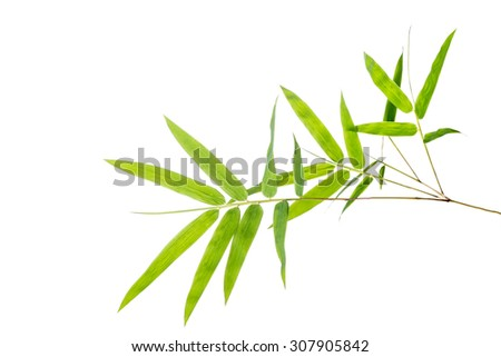 Bamboo leaves isolated on white - stock photo
