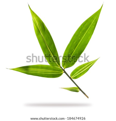 bamboo leaves isolated on white background. - stock photo