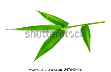 Bamboo leaves isolated on white background - stock photo