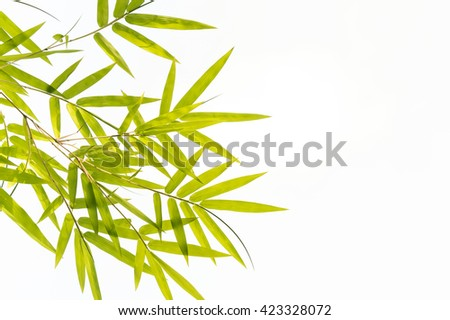 Bamboo leaves,Isolated on white background, - stock photo