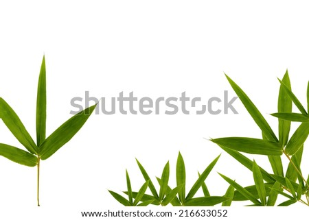 bamboo leaves isolated on white background. for design  - stock photo