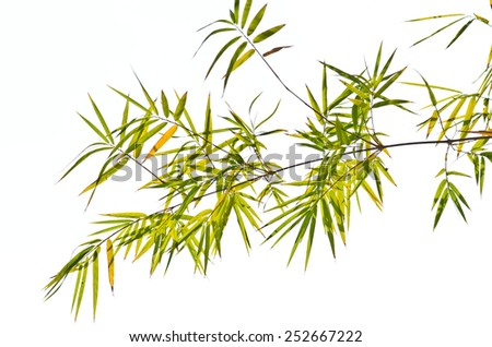 Bamboo leaves on a white background. - stock photo