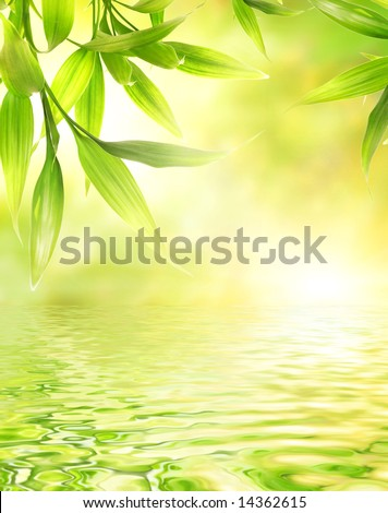 Bamboo leaves reflected in rendered water - stock photo