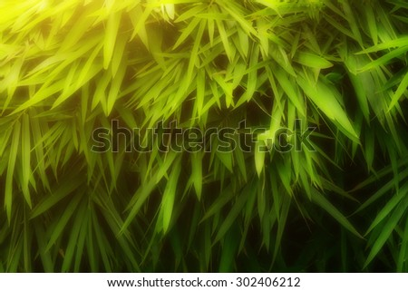 Bamboo leaves with sunlight background - stock photo