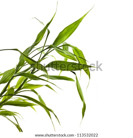 Bamboo on a white background - stock photo