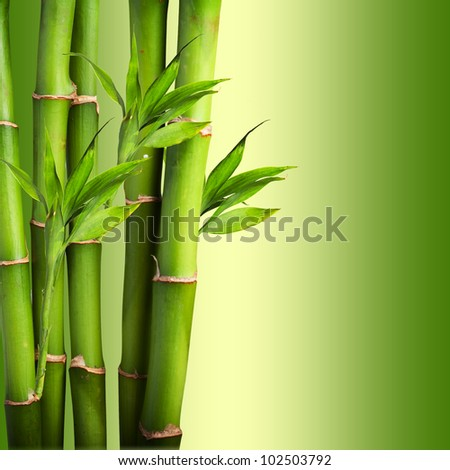 Bamboo on green background - stock photo