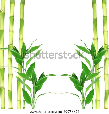 Bamboo on white background - stock photo