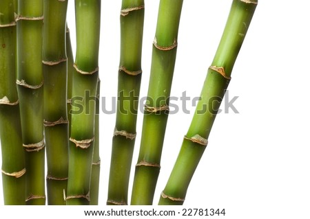 Bamboo over white