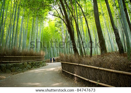 Bamboo path - stock photo