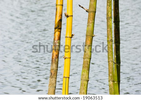 bamboo shoots against water - stock photo