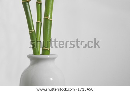 Bamboo shoots in white vase on a white background