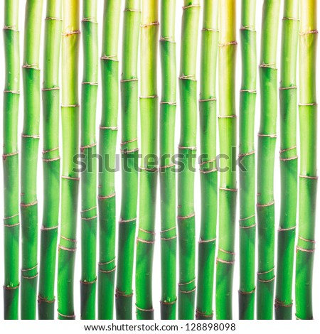 Bamboo sprouts background over white for design