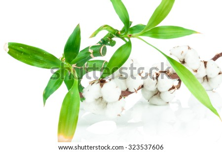 Bamboo stem and a cotton twig on white background - stock photo