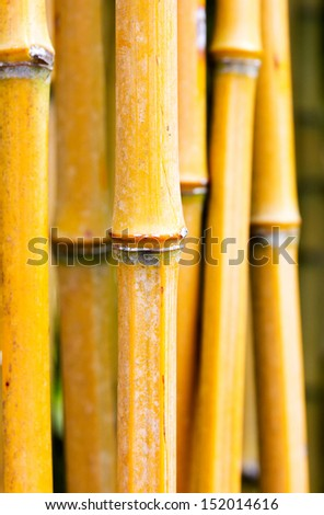 Bamboo stems in the forest - stock photo
