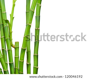 Bamboo stems on white background - stock photo