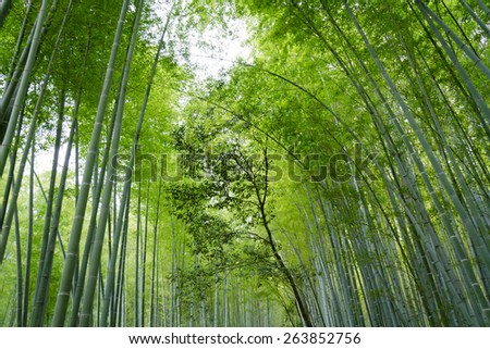 Bamboo Trees Background