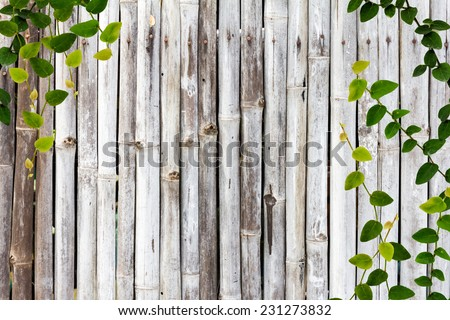 bamboo wall with ivy
