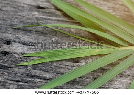 Bamboo wooden floor and on sunlight with background
