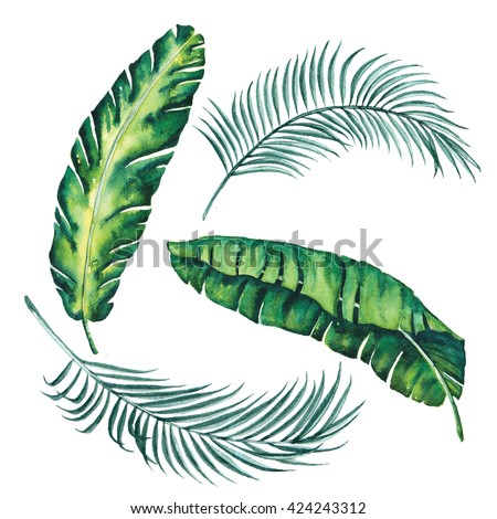banana and palm leaves tropical exotic leaf watercolor vintage object ,design wallpaper vintage Hawaii beach isolated on white background illustration - stock photo