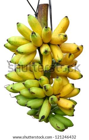 Banana bunch - stock photo