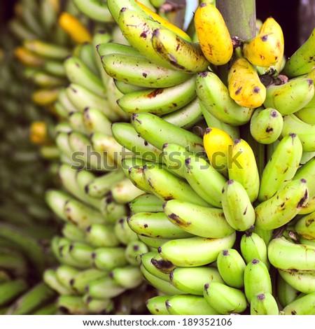Banana Bunches, Latin America street market, Ecuador, Guayas province - stock photo