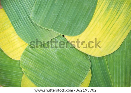 Banana leaves for wrapping food as dishware - stock photo