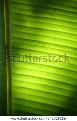 Banana leaves with shadow