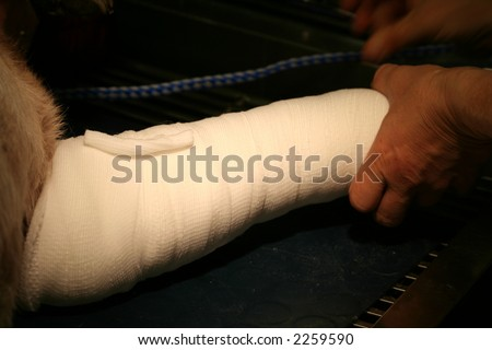 bandaging of a limb - stock photo