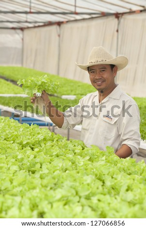 BANGKOK - JAN 4: An unidentified Thai farmer shows hydroponic plant from Hyroponic fastival on Jan 4, 2013 in Bangkok, Thailand. The festival of hydroponic in SE Asia.