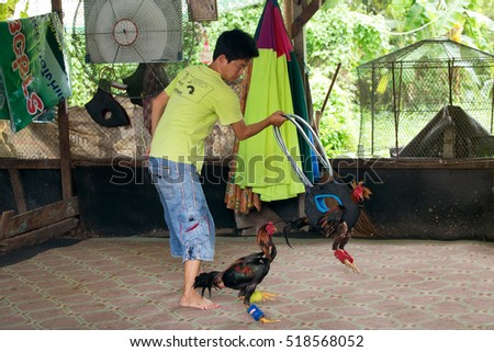BANGKOK, THAILAND, OCTOBER 03, 2016 : A man is developing the aggressiveness of a fighting rooster by making another one turning around in a cage in the district of Talat Phlu, Bangkok, Thailand