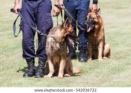 BANGKOK, THAILAND- SEPTEMBER 20, 2014:  Police officer Demonstration, training and the work of police dogs. Bangkok, Thailand.