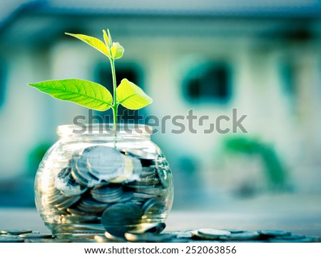 bank,piggy bank,Money,Coins,Concept,Tree, Sprout growing on glass piggy bank with home in saving money concept