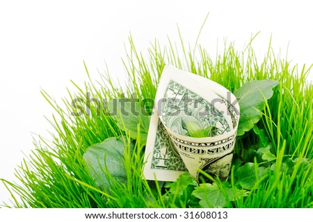 Banknote folded inside the green grass and leaves