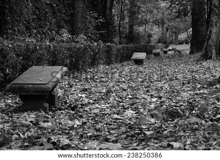 Banks and Fallen leaves on the forest of the Alhambra - stock photo