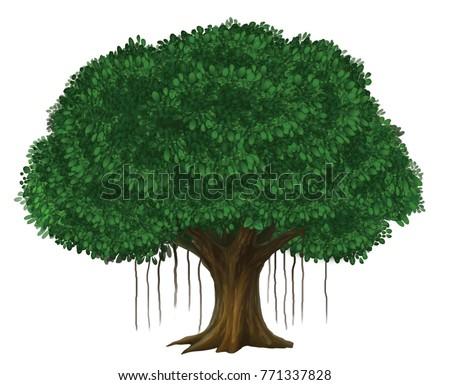 Banyan Tree Illustration