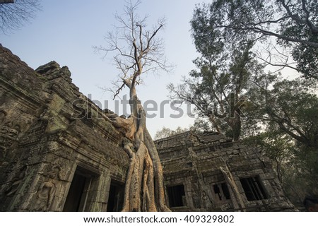 banyan tree root covering stone prasat  Ta Prohm in Angkor thom,angkor wat  Siem Reap, Cambodia - stock photo
