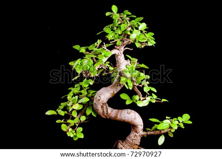 Banzai isolated on black background - stock photo