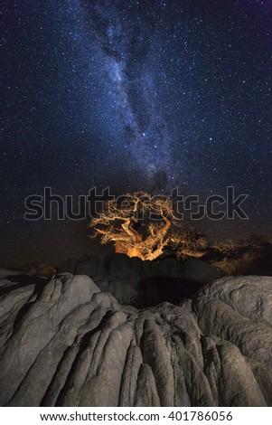 Baobab tree under the milkyway - stock photo
