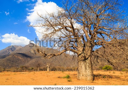 Baobab trees in a valley in Tanzania, Africa - stock photo